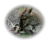Gunyah kangoeroemelk