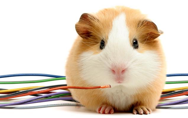 404 hamster